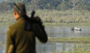 動物保護レンジャーの近くで水浴びをする一角インドサイ。