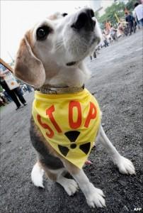 核STOP犬