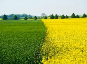 ドイツの田園